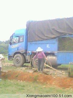 马尼拉草皮 湖南郴州书生绿化苗圃 资材供应高清图片