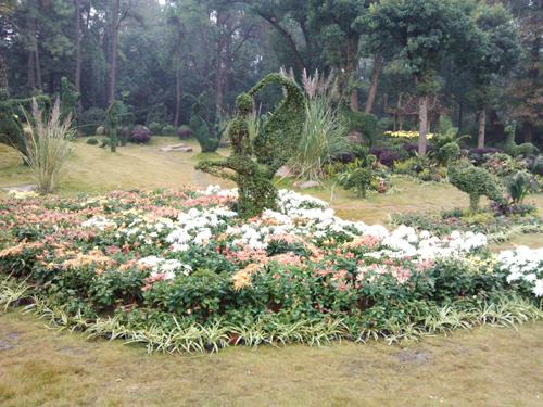 杭州植物园中华艺术园——2011菊展项目