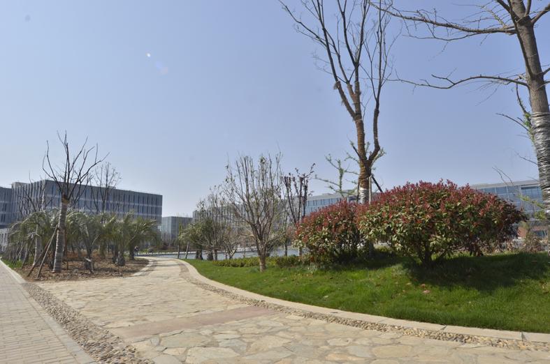 新建南京紫东国际创意园建设项目二期景观绿化工程