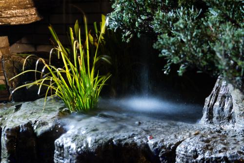 中国农村别墅院子假山鱼池图片