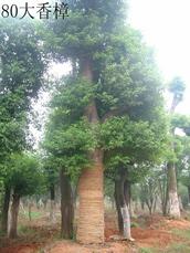 益阳市赫山区马龙苗木场