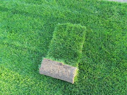 上海大地草坪基地
