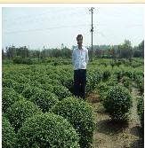 沭阳县锦源园林绿化苗木场