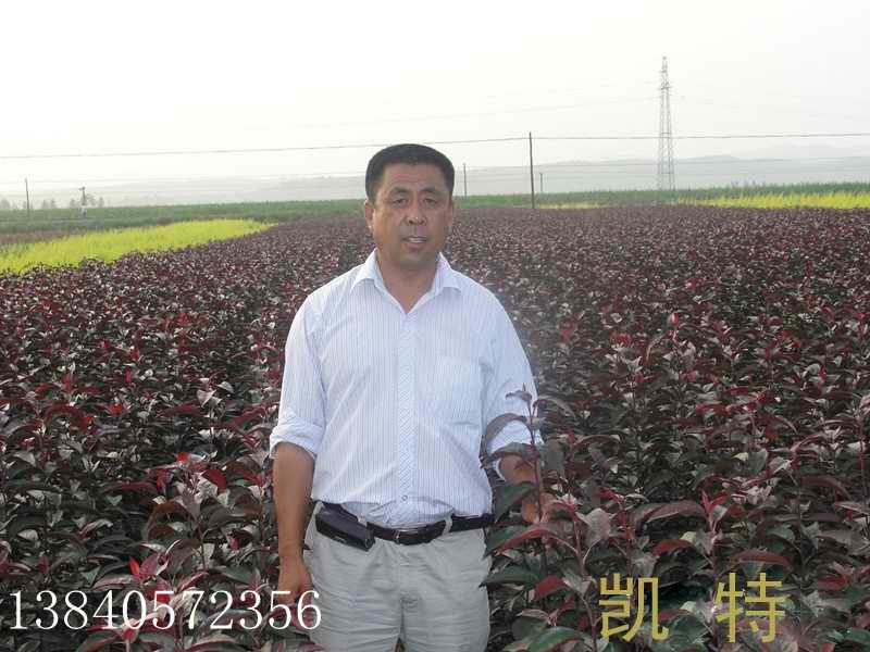 辽宁省新民市升升红叶苗圃