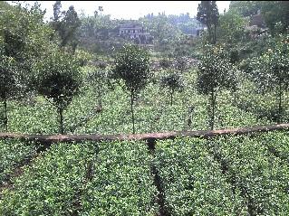 泸州种子种苗站