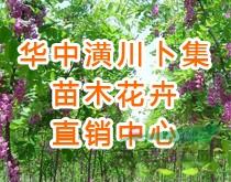 河南潢川华中苗木花卉直销中心