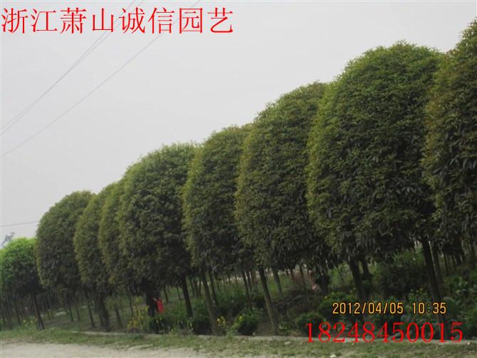 浙江花镜园林有限公司