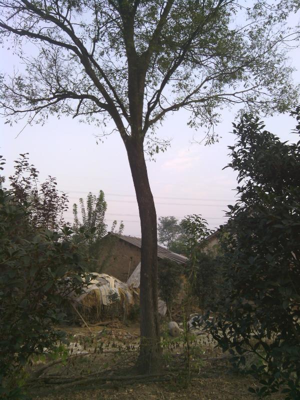 合肥市沃实园林绿化有限公司