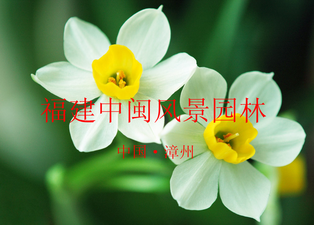 福建中闽园林花木场
