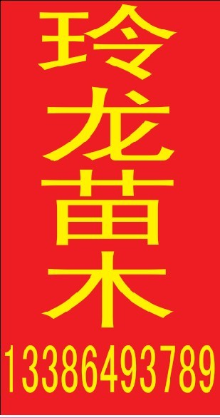 滨州玲龙苗木基地