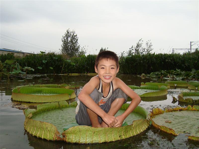 蚌埠韵莲苑景观园林有限公司