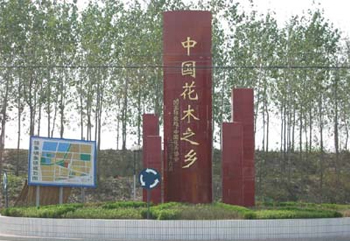 沭阳县华丰园林绿化苗木场