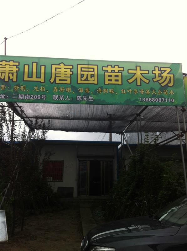 杭州萧山新街镇明富花木场
