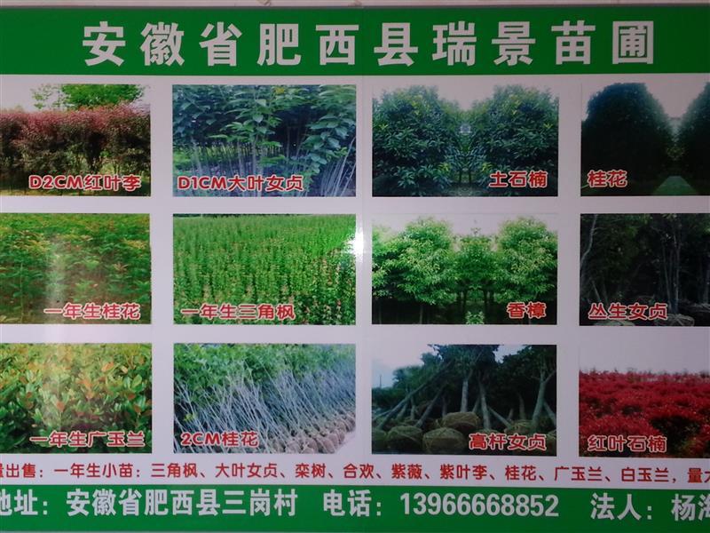 肥西县上派镇瑞景园艺场
