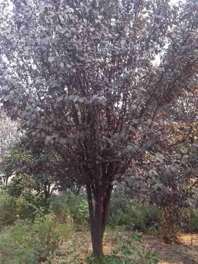 安徽龙腾园林工程有限公司