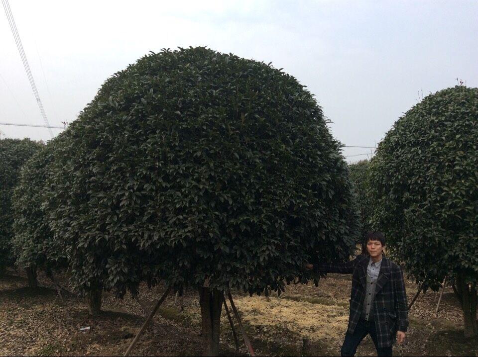 长兴泗安忠山苗木场