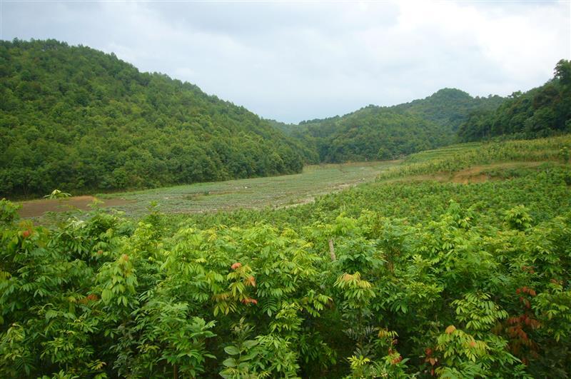 福建新常态园林绿化有限公司