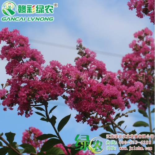 宜黄县绿农农业发展有限公司