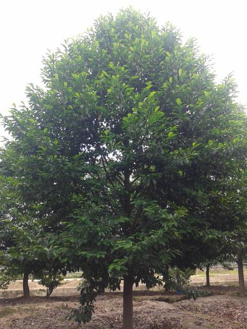 嵊州市章艺园林绿化花木场