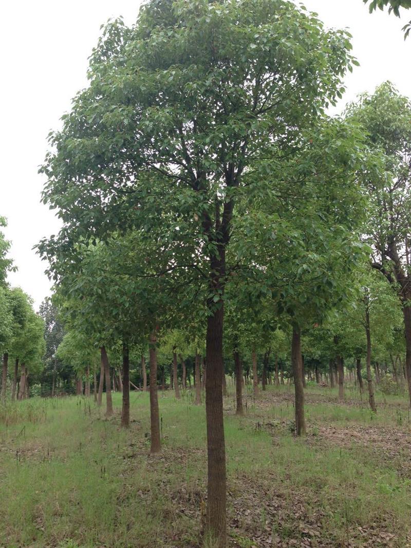 上海雨蝶绿化园艺场