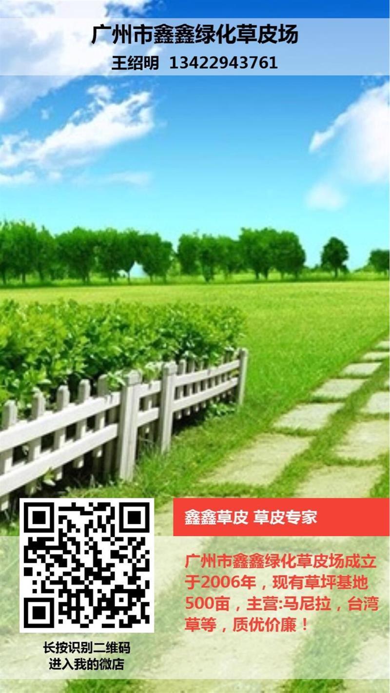 广州市鑫鑫绿化草皮场