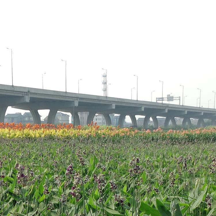 沭阳县新河镇田心花卉苗木场