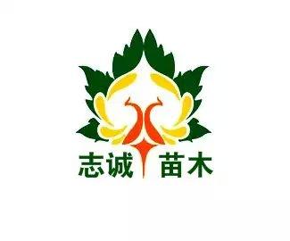 山东省济宁市志诚苗木种植基地