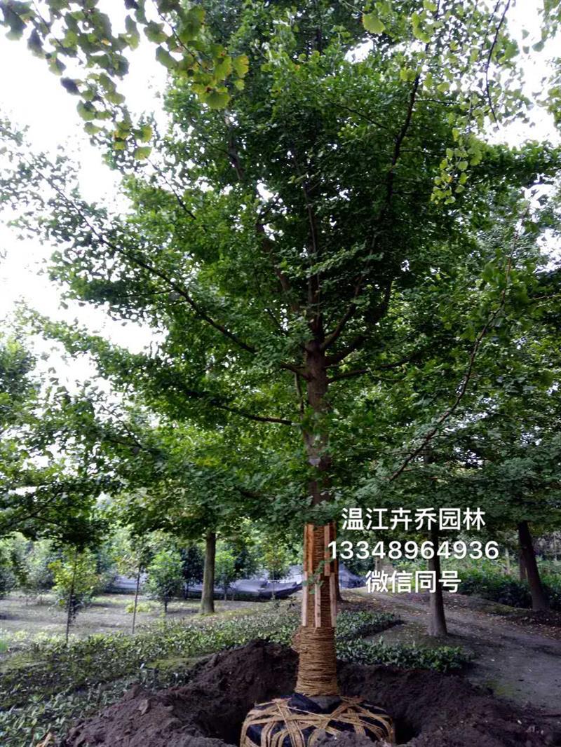 温江卉乔园林