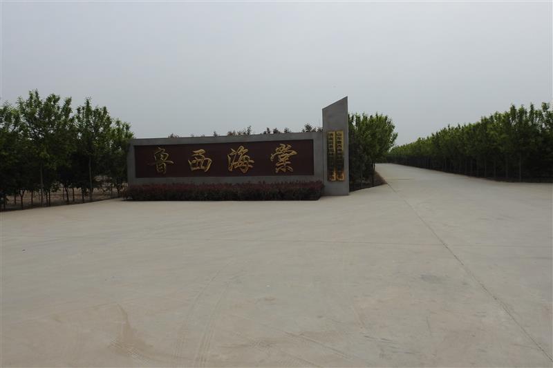 山东鲁西海棠种植有限公司