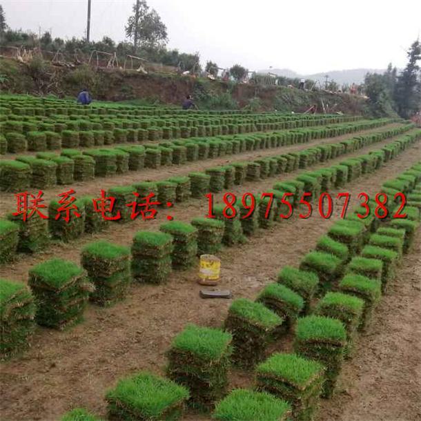郴州顺发绿化草坪苗木基地