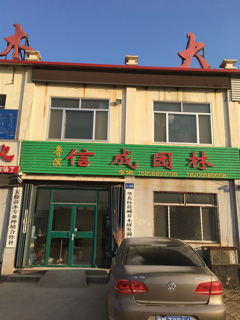 惠民县天使苗木种植专业合作社