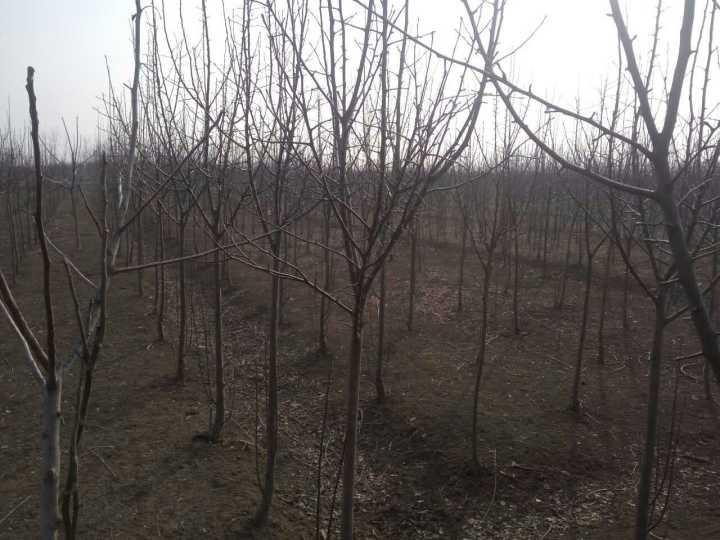 江苏恒天然农业发展有限公司