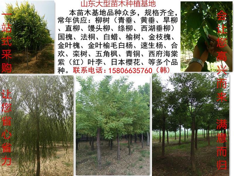 山东豪迈大型苗木种植基地