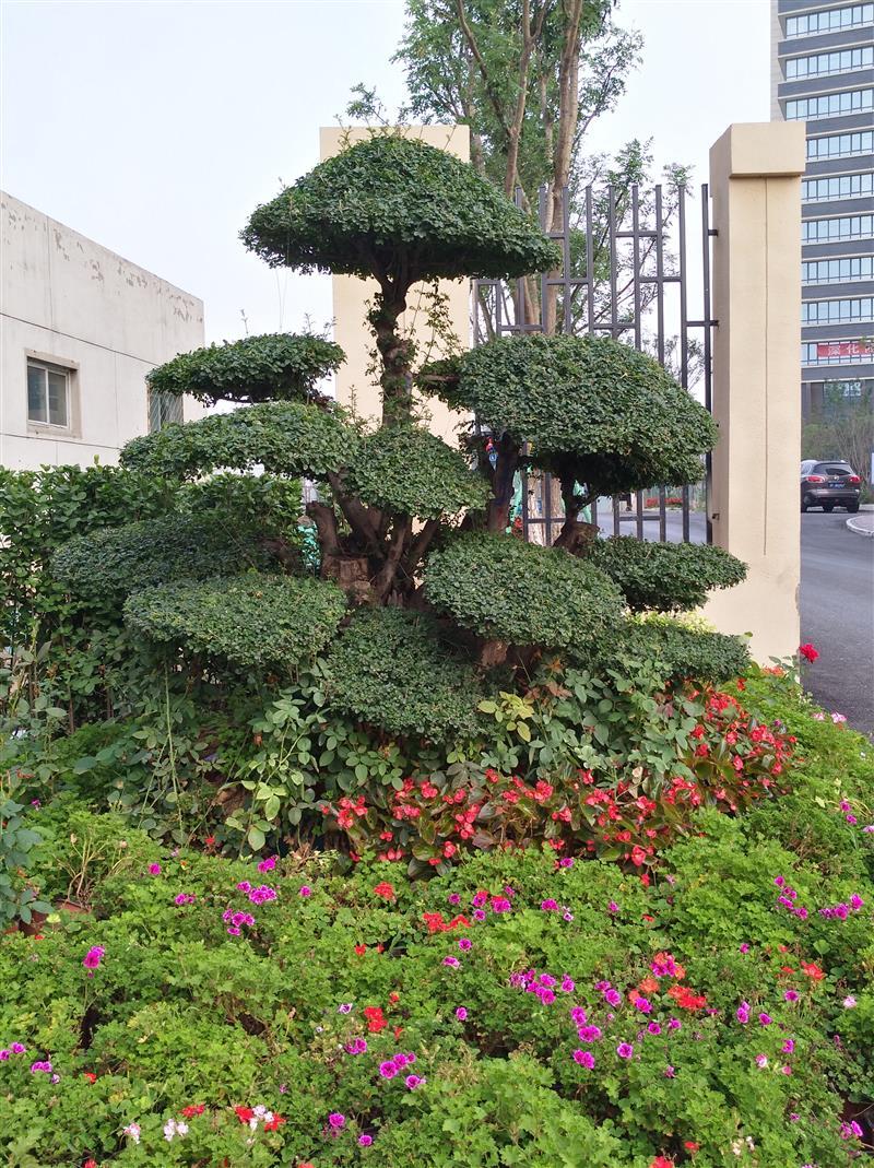 北京市通开花木苗圃