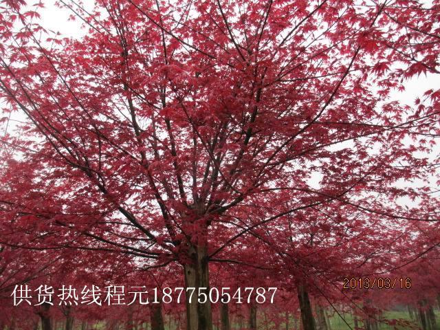 广西神州苗木种植基地