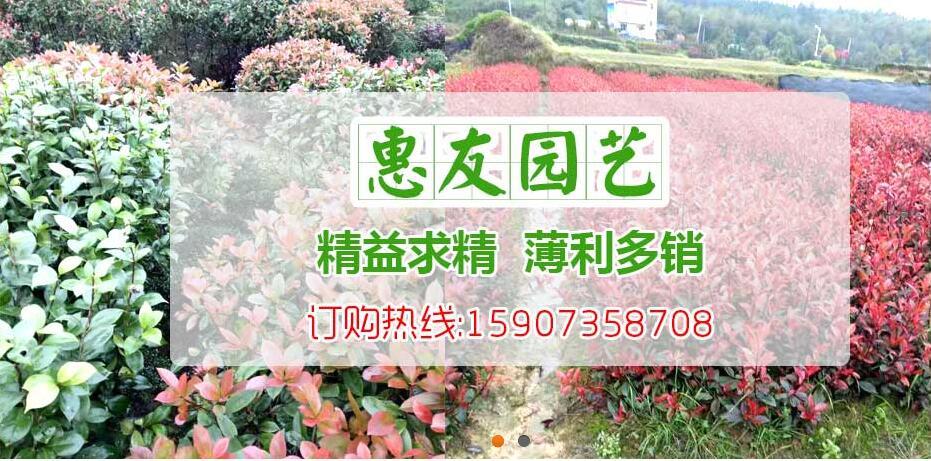 郴州市惠友园艺有限公司