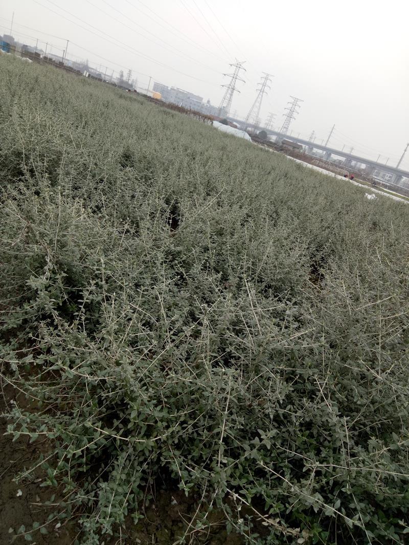 杭州萧山新街秦林园艺场