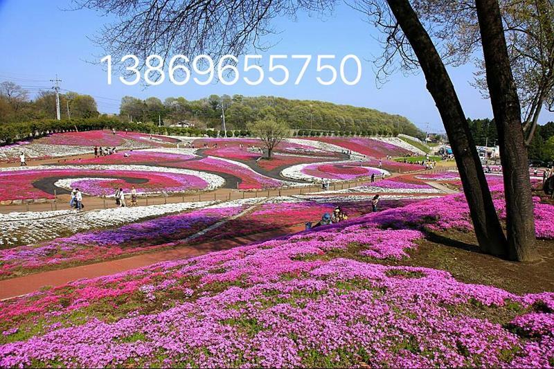 青州市弥河镇华伟诚信花卉苗木园
