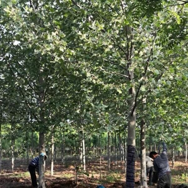 济宁市兖州区爱鑫苗木种植专业合作社