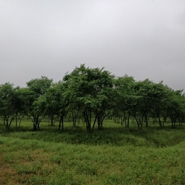 安徽嘉景农业综合开发有限公司