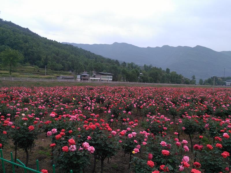 南江县金藤农业有限公司