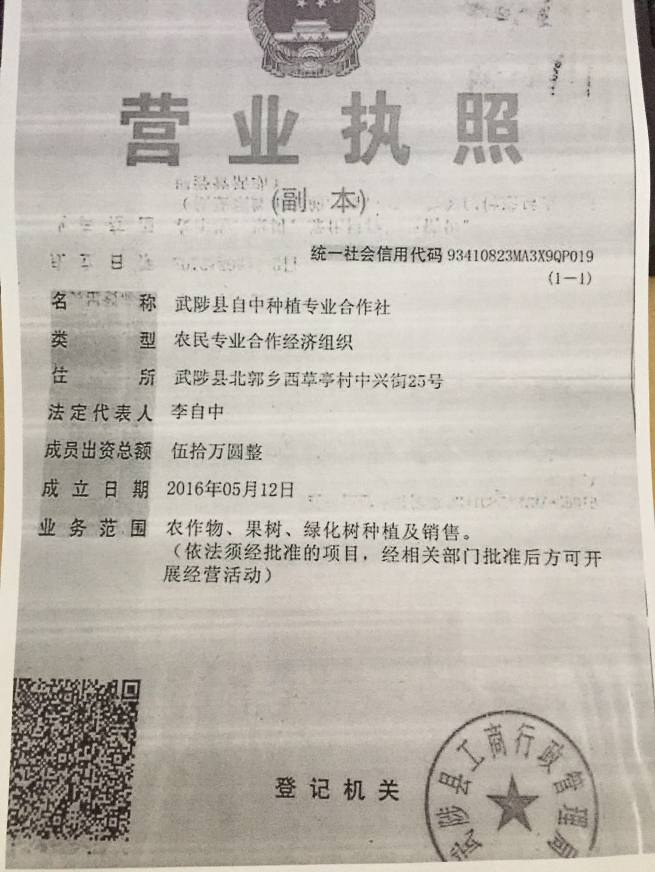 武陟县自中种植专业合作社