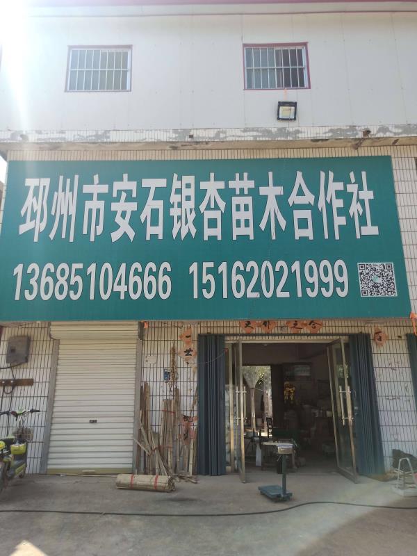 邳州市安石银杏苗木种植专业合作社