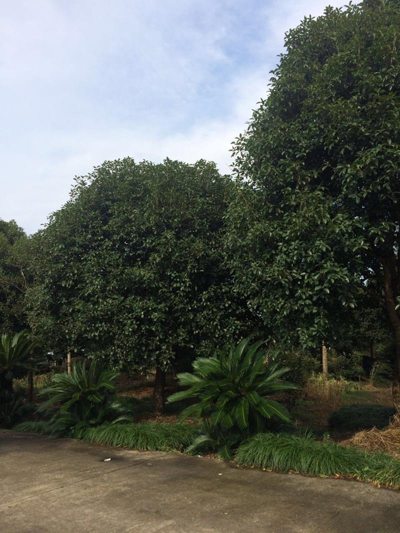 台州绿星苗木有限公司