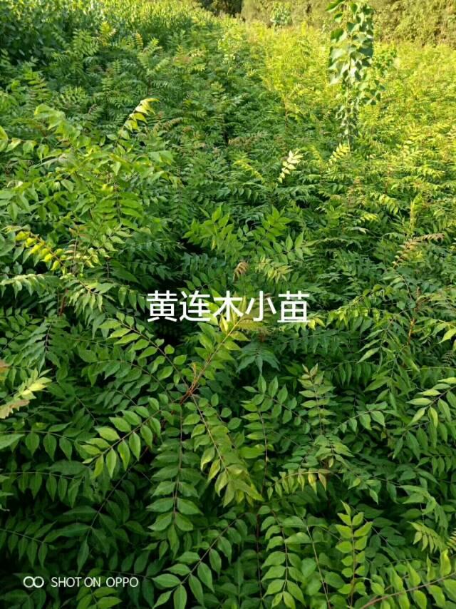 九江顺鑫苗木基地