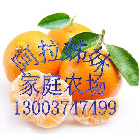 象山县贤庠姊妹家庭农场