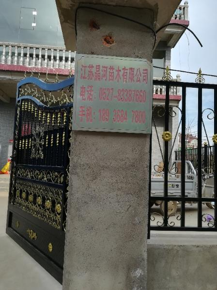 沭阳县新河镇晶河苗木场