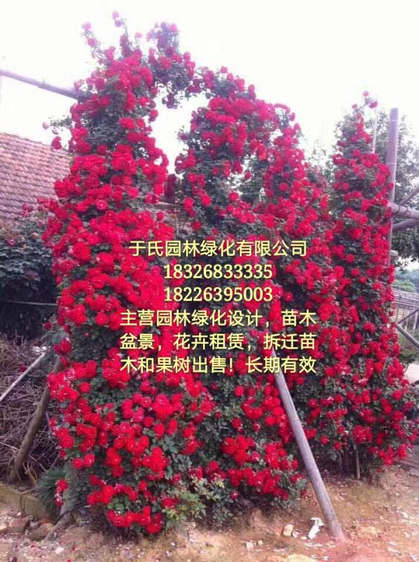 临泉县于氏园林绿化有限公司