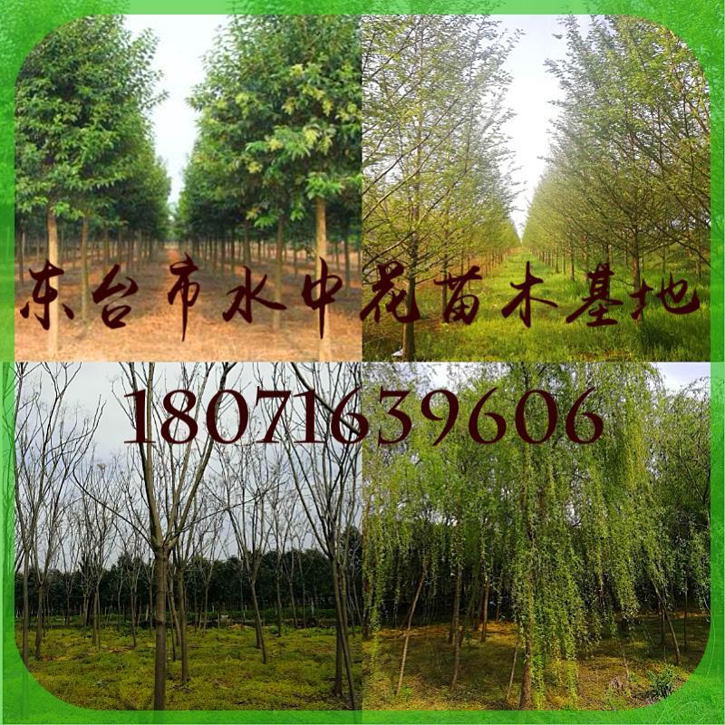 东台市水中花园林绿化工程有限公司