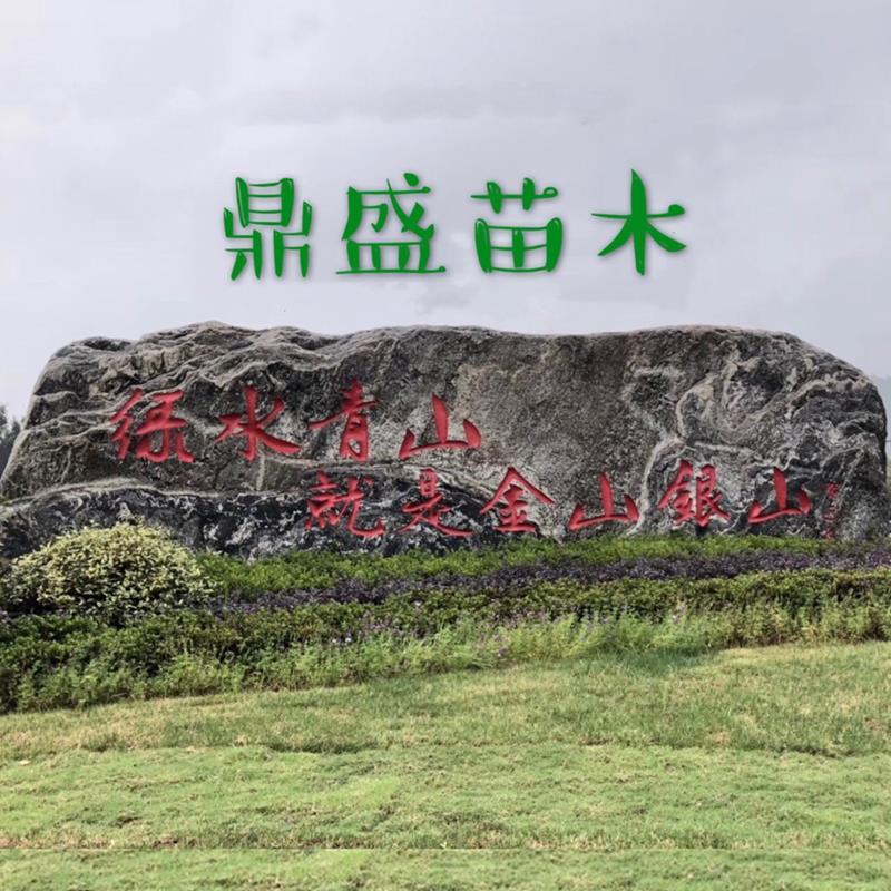 长兴泗安鼎盛苗木场